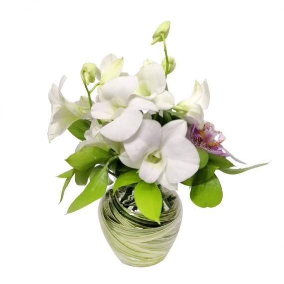 Arranjo de Orquídeas Denphal Elegante
