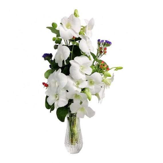 Harmony Orchid Arrangement