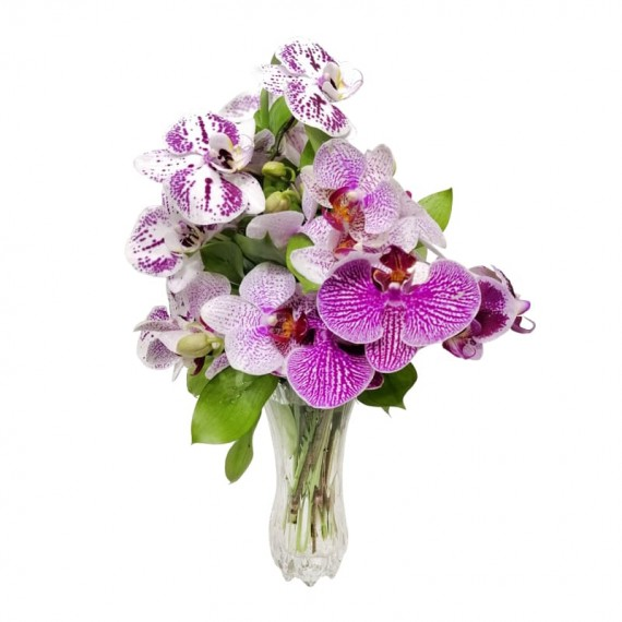 Arranjo de Orquídeas Phalaenopsis em vaso Especial