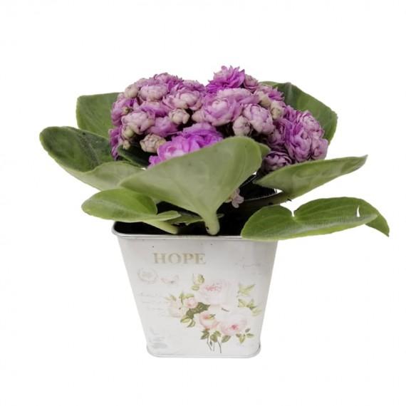 Arranjo de Violetas em Cachepot - Rosa
