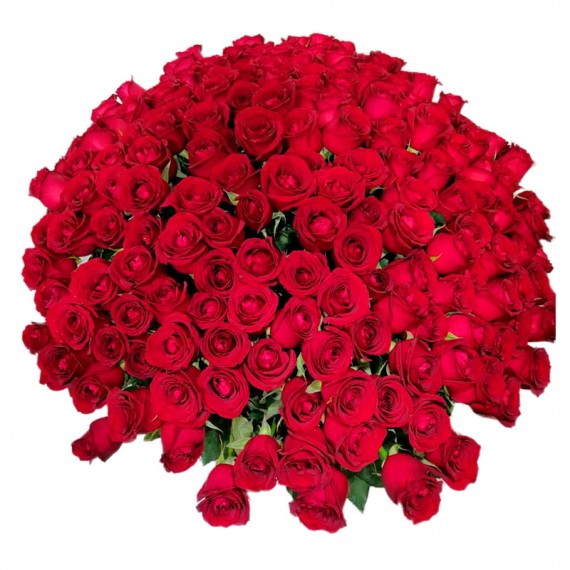 Mega Bouquet with 500 National Roses