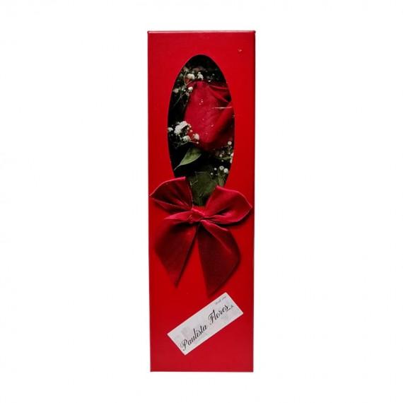 Caixa com 01 Verdadeira Rosa Colombiana