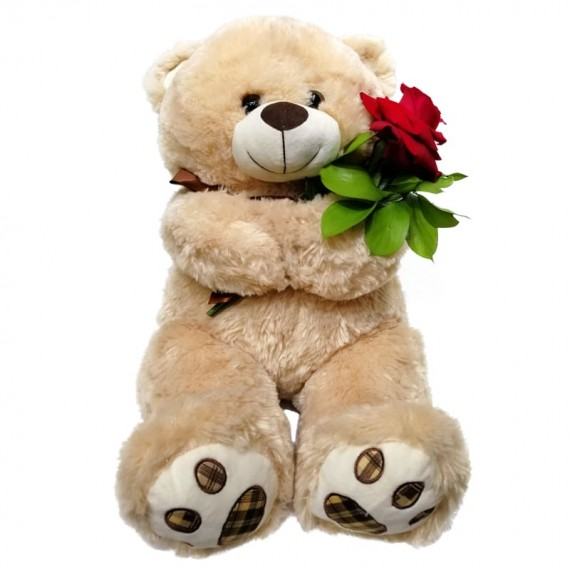 Teddy Bear with a Colombian Rose