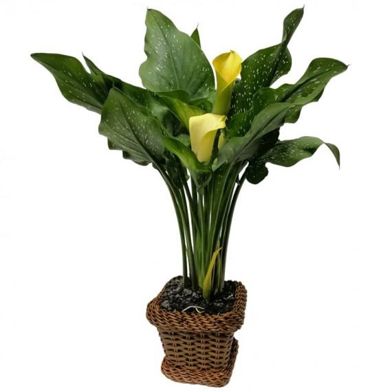 Flower Cup Milk Yellow in Synthetic Ratan Vase