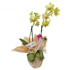 Mini Wrapped Yellow Orchid