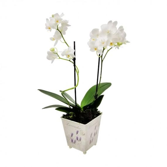Mini Orquídea Plantadas em cachepot floral