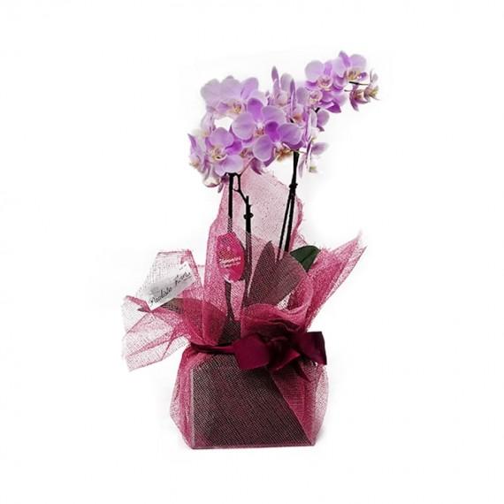 Mini Orquídea Rosa em Vaso de Vidro