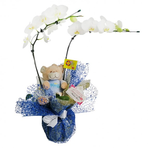 White Orchid with Teddy Bear