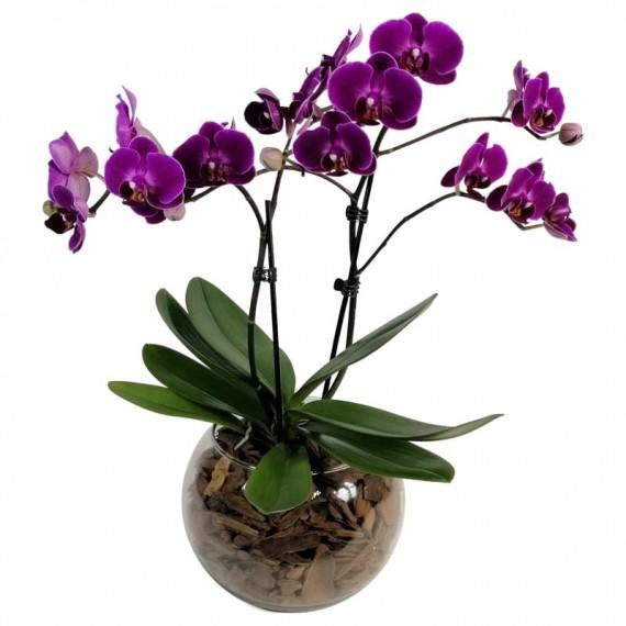 Pink Orchid V