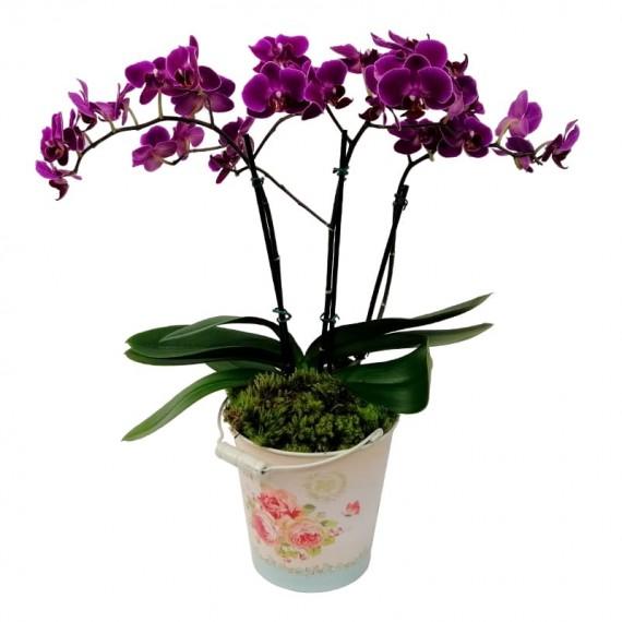 Orquídea plantada Roxa Média em Cachepot Lata