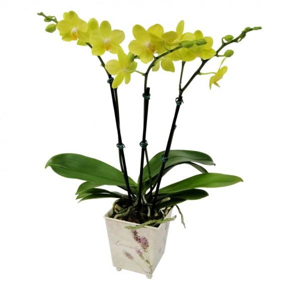 Mini Orquídea Amarela em Cachepot Floral