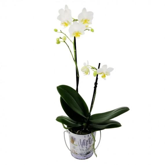 Mini Orquídea Branca em Cachepot Lata