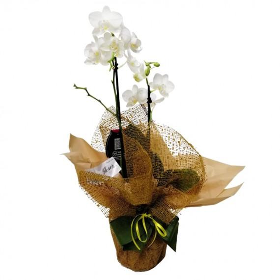 Mini White Orchid