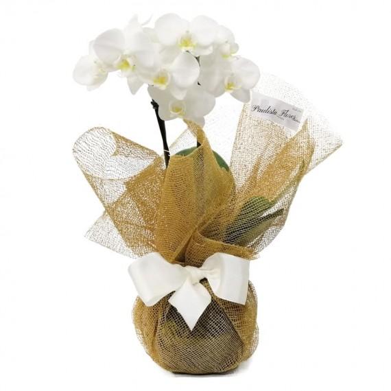 Mini Orquídea Branca em Vaso de Vidro