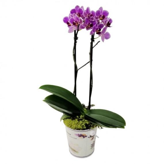 Mini Orquídea Lilás em cachepot floral