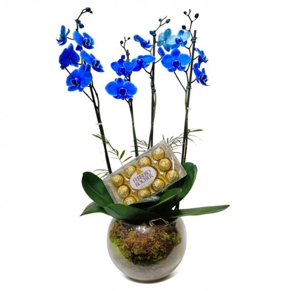 Blue Orchid in Round Glass Vase with Ferrero Rocher Chocolate
