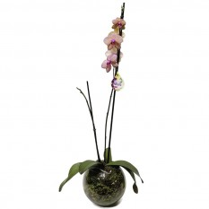 White and Purple Orchid in Round Glass Vase