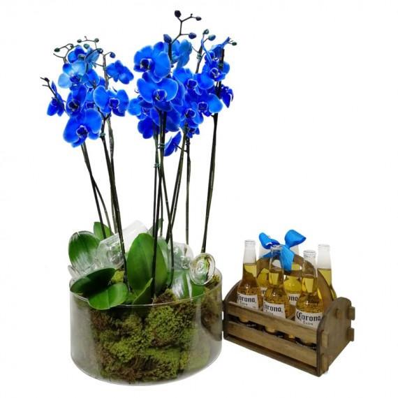 Blue Orchid in Glass Vase with 6 Corona Beers