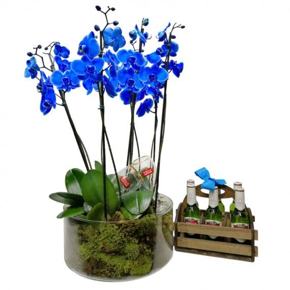 Blue Orchid in Glass Vase with 6 Stella Artois Beers