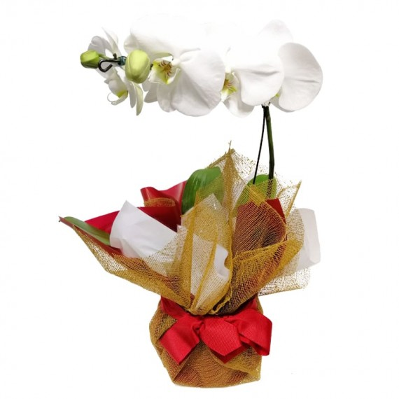 Wrapped White Orchid 01 Stem