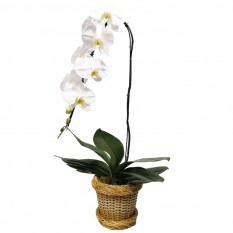 White Orchid in Synthetic Ratan Vase