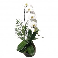 White Orchid in Round Glass Vase