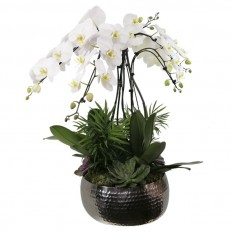 White Waterfall Orchid with Stainless Steel Vase and Succulents