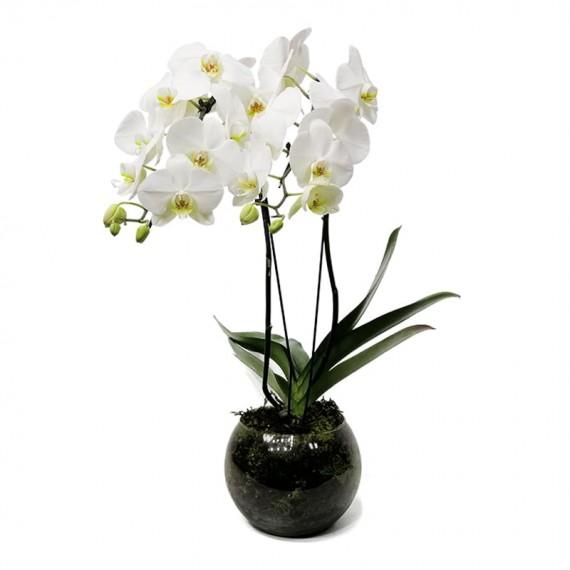 Orquídea Cascata com 2 hastes no vaso