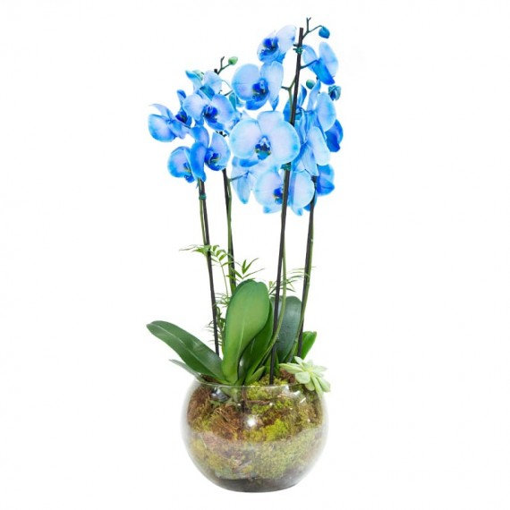 Blue Orchid in Large Glass Vase with 4 Stems