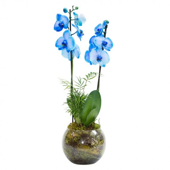 Blue Orchid Phalaenopsis 2 in Round Glass Vase