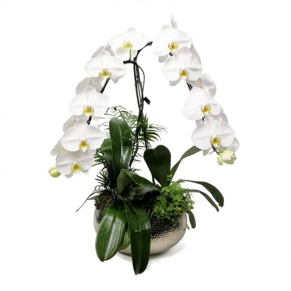 Arranjo Grande com Orquídea Cascata Branca Plantadas em Vaso de Inox