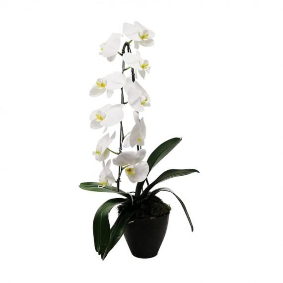 Orquídea Cascata Phalaenopsis Branca em vaso simples