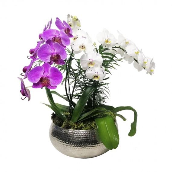 Arranjo Grande com 3 vasos de Orquídeas plantada em Vaso de Alumínio