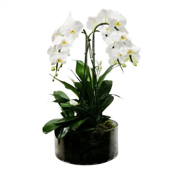 Arranjo Grande de Orquídeas Brancas com Lírios