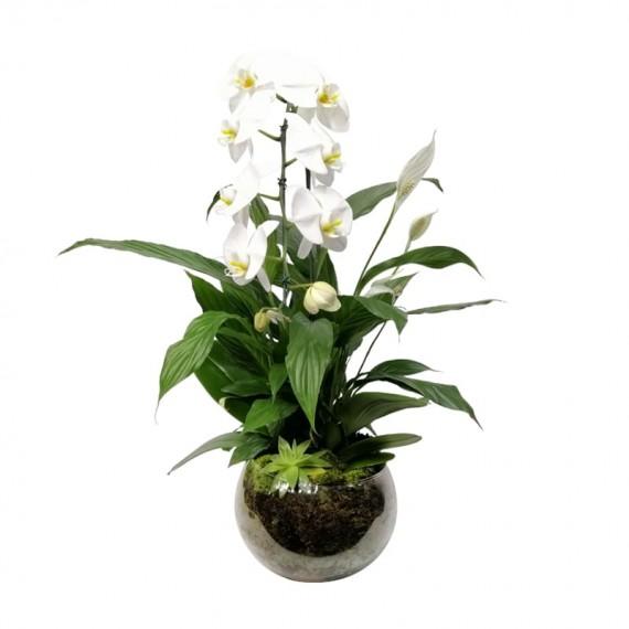 Arranjo Médio de Orquídeas Brancas com Lírios