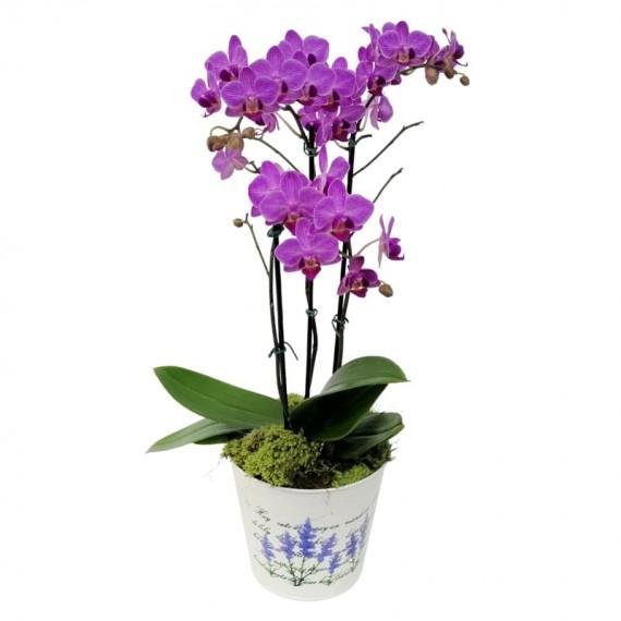 Orquídea Plantada Média Lilás em Cachepot Lata