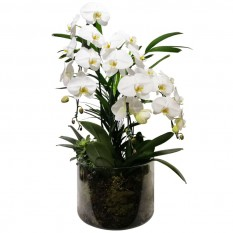 Waterfall Vase with 03 White Orchids