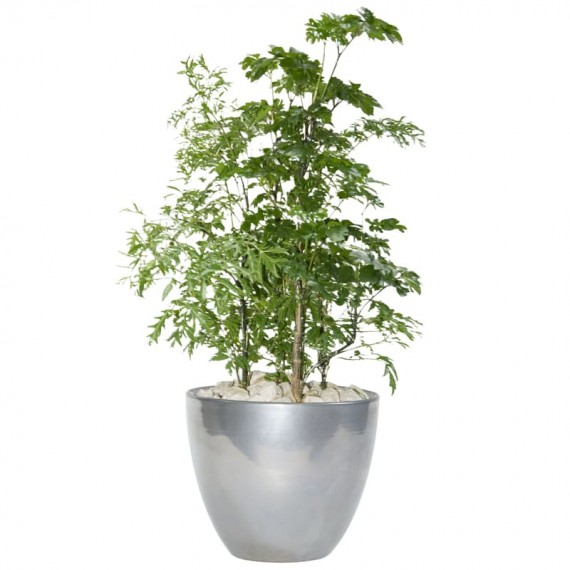 Silver Vietnamese Vase of Happiness Tree