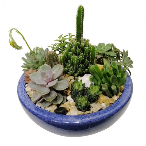 Vietnamese Vase with Succulents and Cactus
