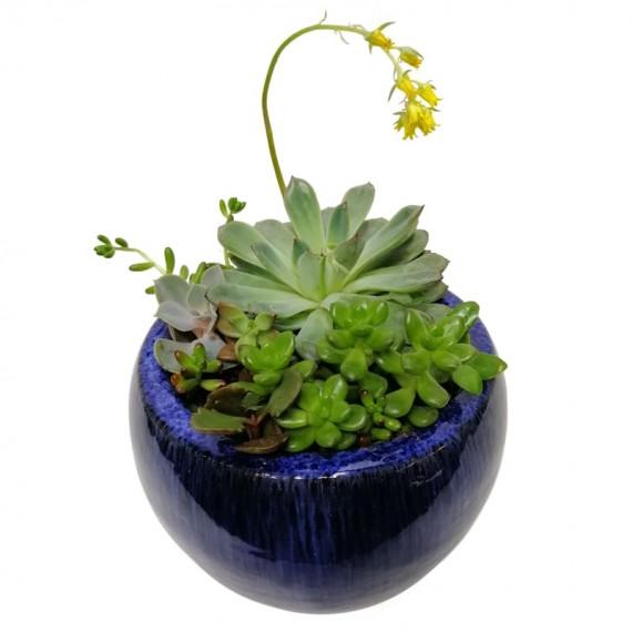 Vietnamese Vase with Succulents
